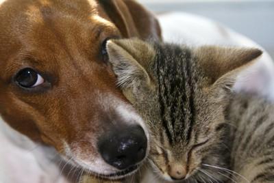寄り沿って眠る犬と猫