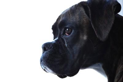 悲しげな表情の黒い犬の横顔
