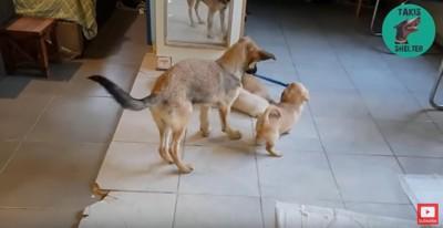 ひもで遊ぶ犬