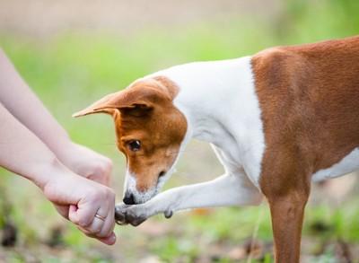 人の手に合わせる犬