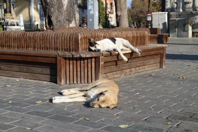 トルコの街の中の犬たち