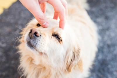 目を細める犬