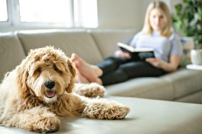 犬と本を読む女性