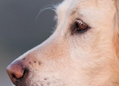 犬の眉部分