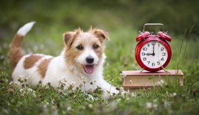 待つ犬と時計