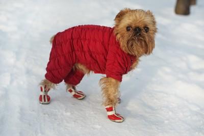 赤い靴を履いた犬