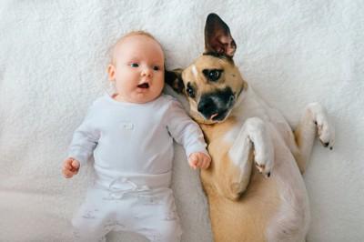 一緒に寝そべる犬と赤ちゃん
