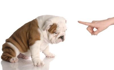 飼い主に怒られて落ち込んでいる犬