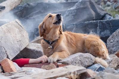 救助を求める人を発見し、知らせている犬