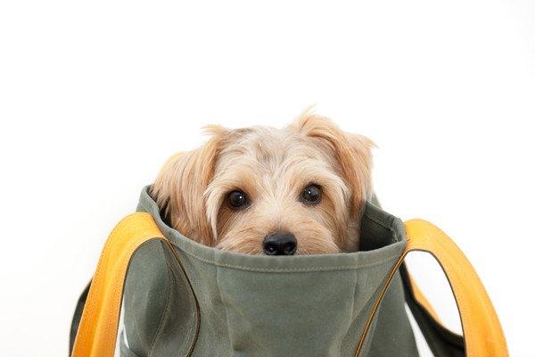 バッグから顔を出す犬