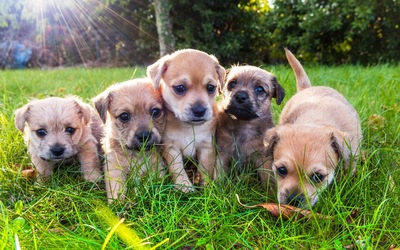 5頭の子犬