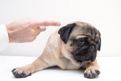 嫌そうな犬