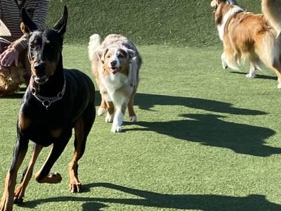 ドッグランで遊ぶ愛犬