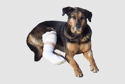 足を骨折した犬