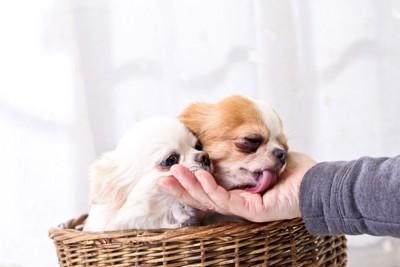 犬を撫でてる写真