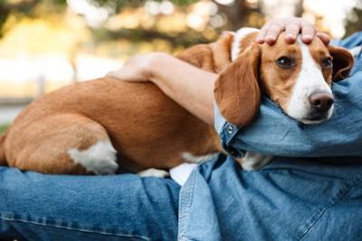 飼い主の膝の上で撫でられる犬