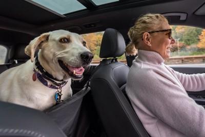 飼い主の運転する車の後部座席に乗っている犬