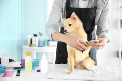 爪を切る犬