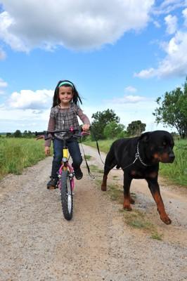 自転車に乗る女の子と犬
