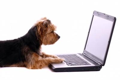 PC と犬