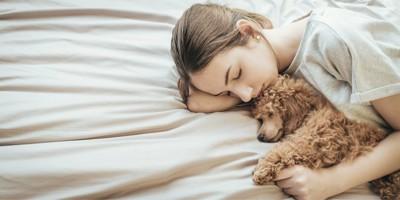 ベッドで飼い主と一緒に寝ている犬