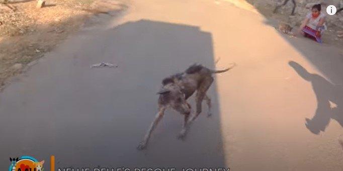 皮膚がボロボロの犬