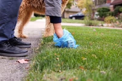 散歩中に犬のうんちを拾う人間の手