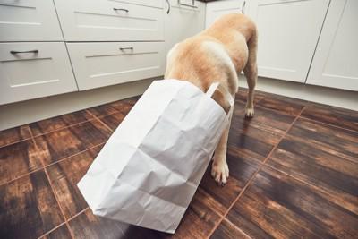 白く紙袋に顔を入れる犬