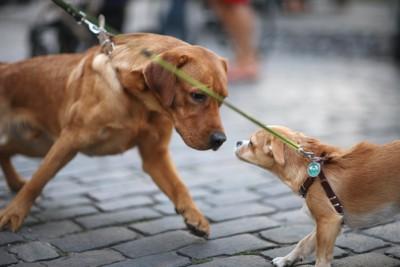 散歩中に顔を近づけ合う2頭の犬