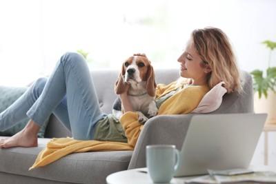 ソファーの上でくつろぐ女性に甘える犬