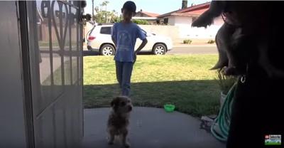 ドアの前に立つ犬