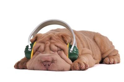 ヘッドフォーンで耳を塞ぐ犬