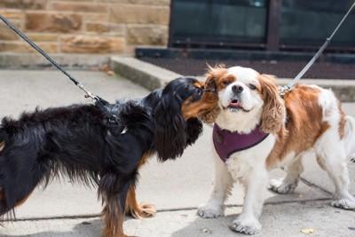 挨拶をする2匹の犬