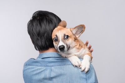 不安そうな表情で飼い主にしがみつく犬