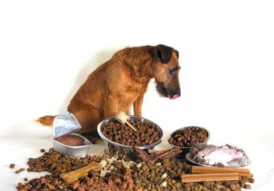 ご飯に囲まれる犬