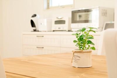 テーブルの上の小さな観葉植物
