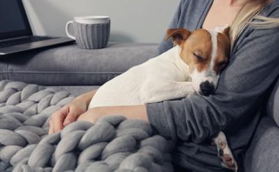 座る女性に抱かれて寝るジャックラッセルテリア