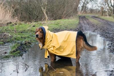 犬用のレインコート