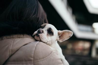 飼い主に抱っこされている子犬