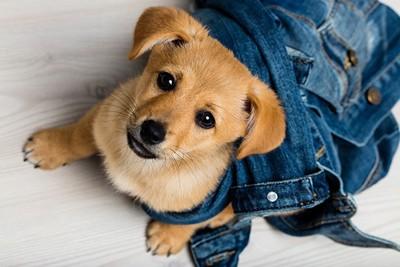 甘えた声で遊びに誘う犬