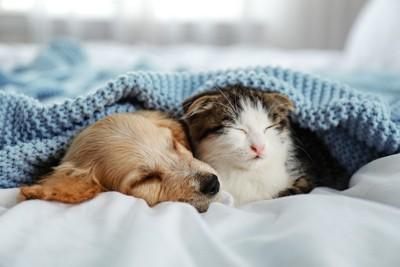 一緒に眠る子犬と猫