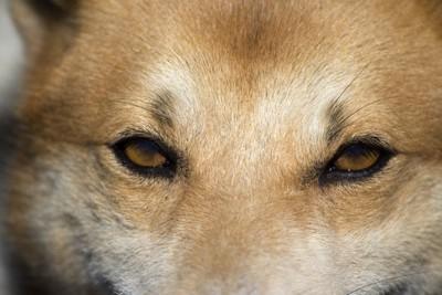 犬の眼のアップ