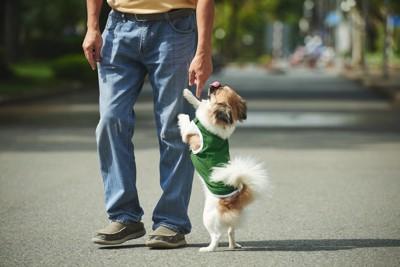 飼い主の足元で立つ犬