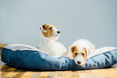 犬用のベッドでくつろぐ二頭の犬