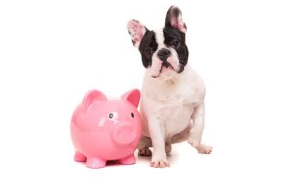 ブタの貯金箱とフレンチブルドッグ