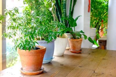 室内 観葉植物