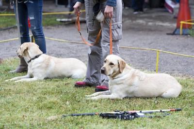 訓練中の盲導犬たち
