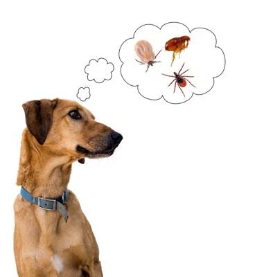 犬と寄生虫