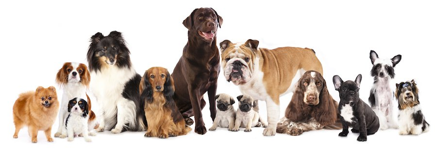 様々な種類の犬たち