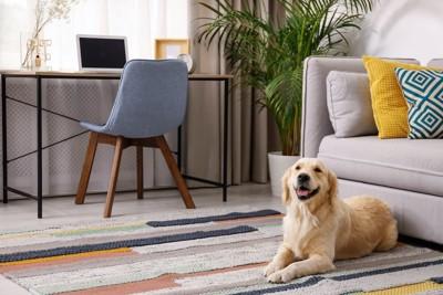 部屋のカーペットの上でくつろぐ犬